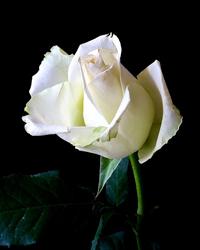 GLORIA ROSE, 75, COMMERCE,  MAY 10, 1946 – SEPTEMBER 18, 2021